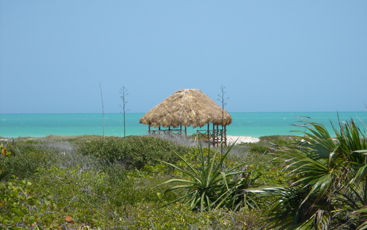 Foto de terreno habitacional en venta en  , rio lagartos, río lagartos, yucatán, 1069219 No. 06
