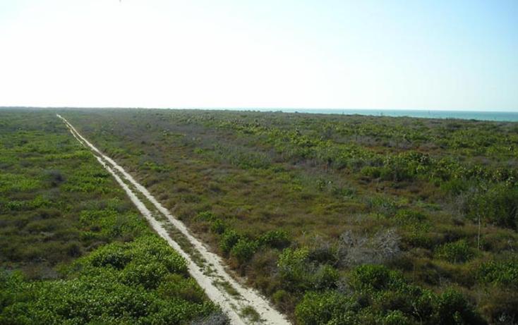 Foto de terreno comercial en venta en  , rio lagartos, r?o lagartos, yucat?n, 1085995 No. 06