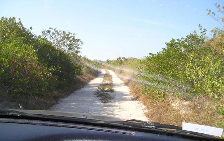 Foto de terreno comercial en venta en  , rio lagartos, r?o lagartos, yucat?n, 1085995 No. 13