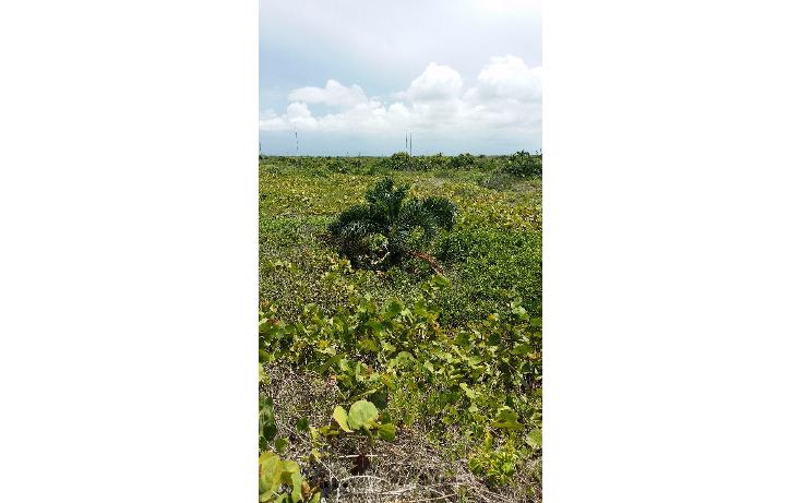 Foto de terreno habitacional en venta en  , rio lagartos, río lagartos, yucatán, 1100075 No. 04