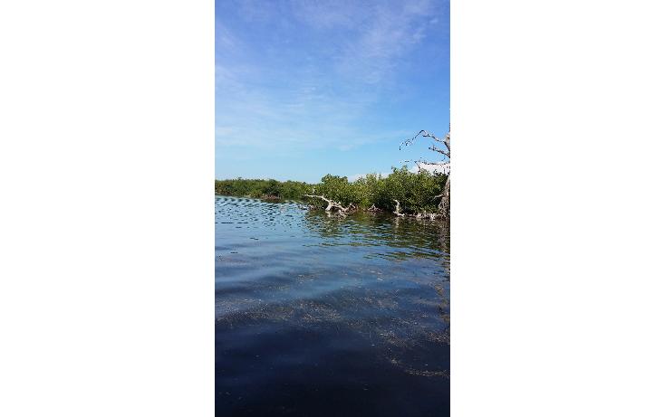 Foto de terreno habitacional en venta en  , rio lagartos, río lagartos, yucatán, 1100075 No. 09