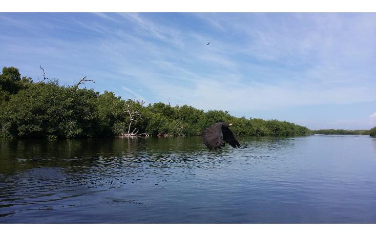 Foto de terreno habitacional en venta en  , rio lagartos, río lagartos, yucatán, 1100075 No. 10