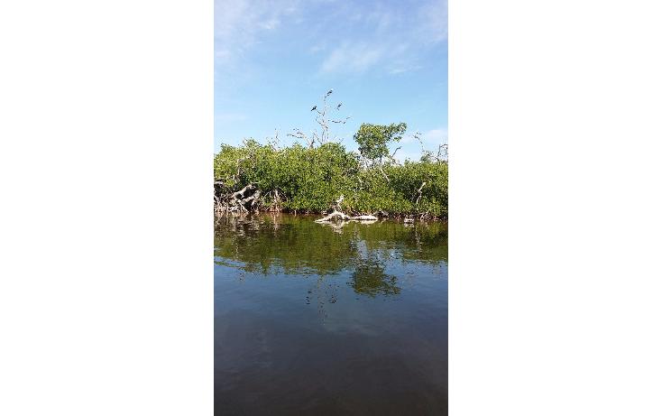 Foto de terreno habitacional en venta en  , rio lagartos, río lagartos, yucatán, 1100075 No. 11