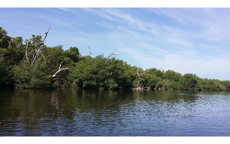 Foto de terreno habitacional en venta en  , rio lagartos, río lagartos, yucatán, 1100075 No. 12