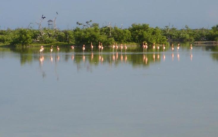 Foto de terreno comercial en venta en  , rio lagartos, r?o lagartos, yucat?n, 941087 No. 02