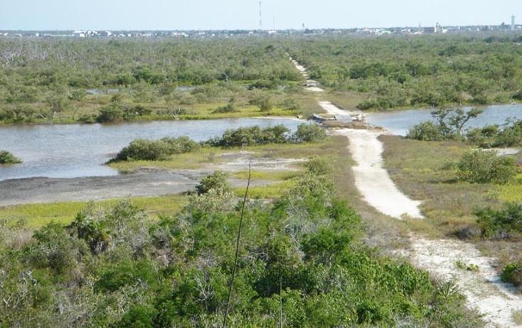 Foto de terreno comercial en venta en  , rio lagartos, r?o lagartos, yucat?n, 941087 No. 14