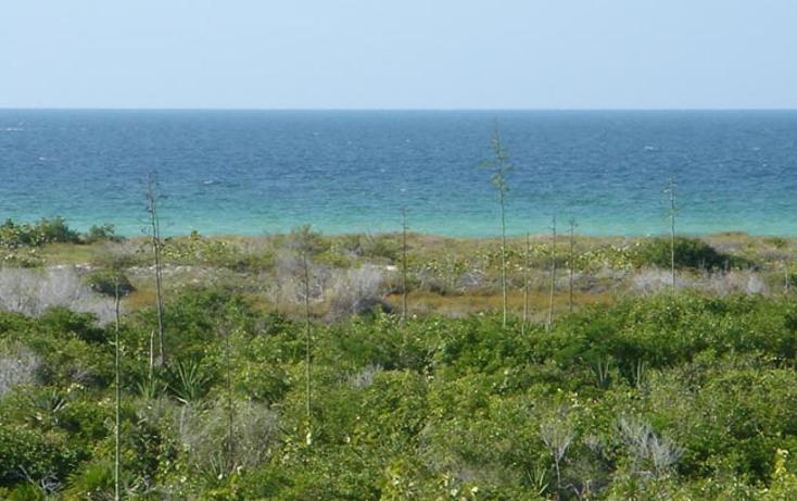 Foto de terreno comercial en venta en  , rio lagartos, r?o lagartos, yucat?n, 941087 No. 17