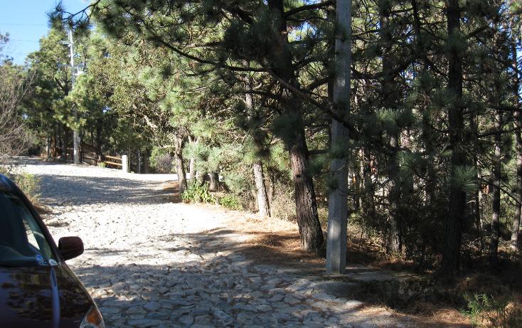 Foto de terreno habitacional en venta en  , san antonio de las alazanas, arteaga, coahuila de zaragoza, 1104891 No. 08