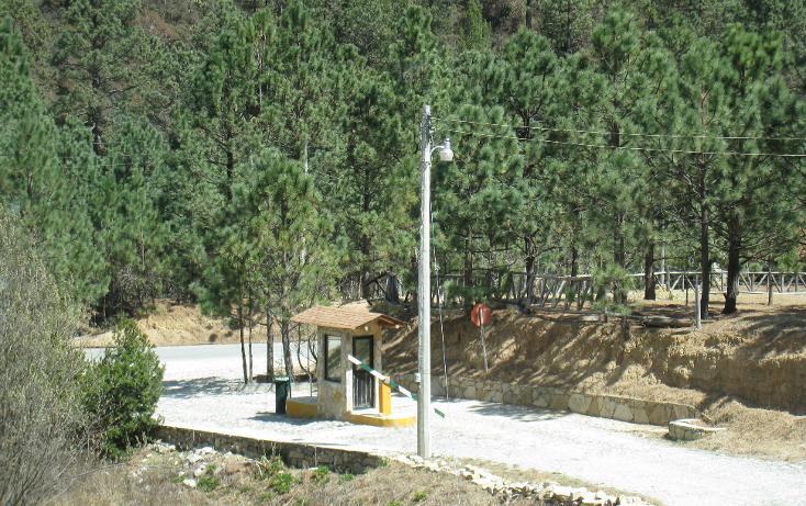 Foto de terreno habitacional en venta en  , san antonio de las alazanas, arteaga, coahuila de zaragoza, 1104891 No. 13