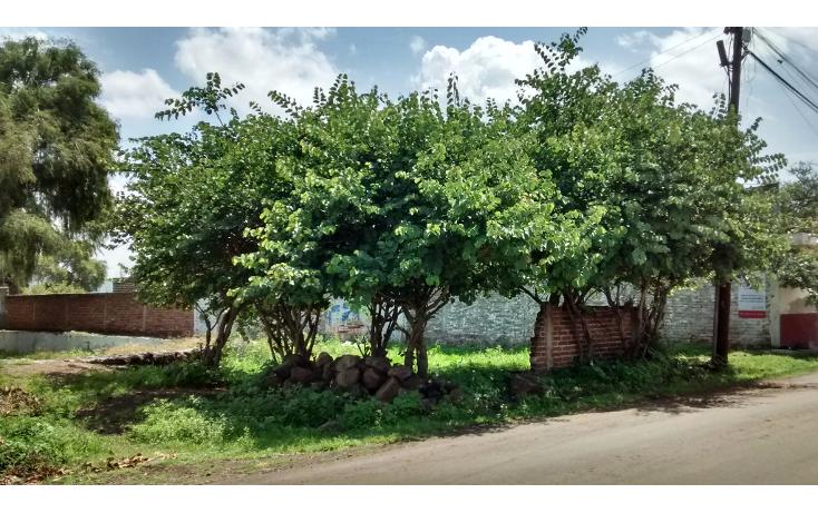 Foto de terreno habitacional en venta en  , san antonio guaracha, villamar, michoacán de ocampo, 2042148 No. 05