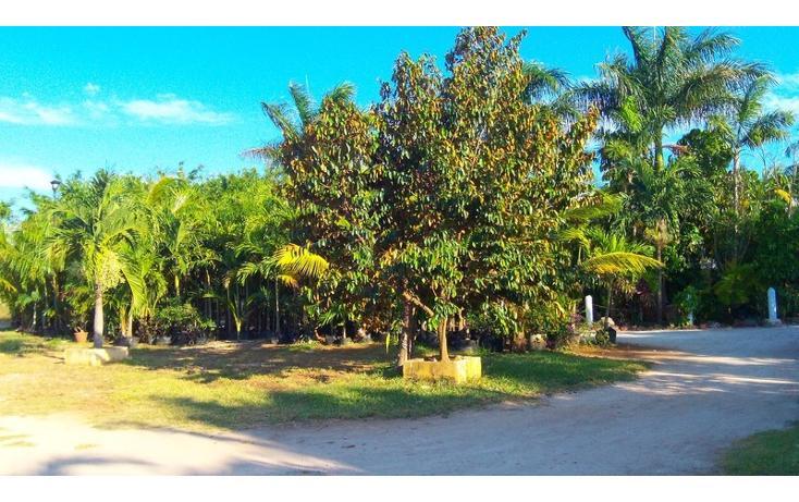 Foto de rancho en venta en  , san antonio kaua iii, kanasín, yucatán, 448178 No. 25