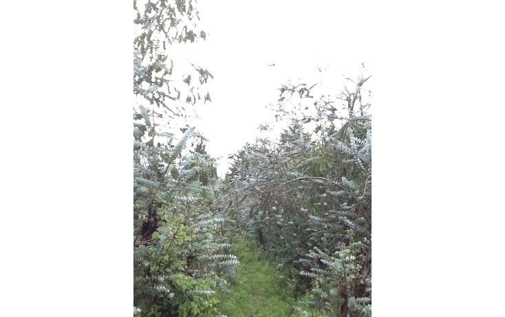 Foto de terreno habitacional en venta en  , san bartolo, amanalco, méxico, 829557 No. 07
