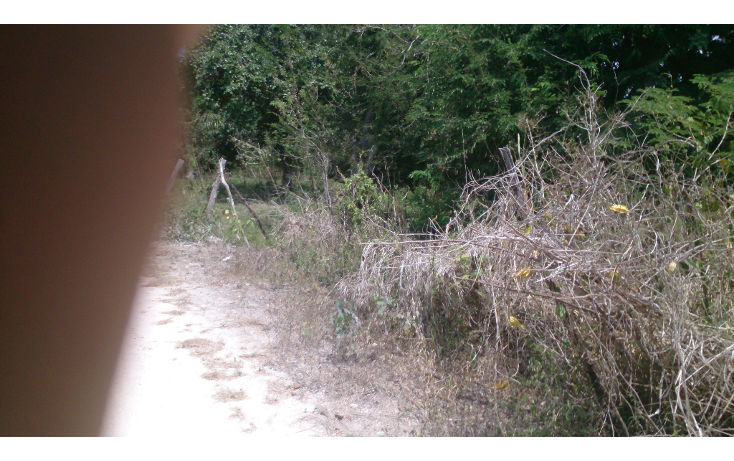 Foto de terreno comercial en venta en  , san francisco koben, campeche, campeche, 1259723 No. 06