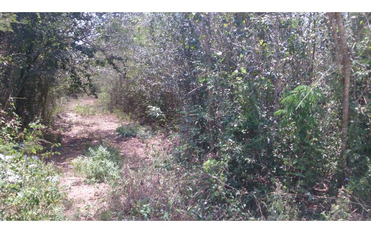 Foto de terreno comercial en venta en  , san francisco koben, campeche, campeche, 1259723 No. 14