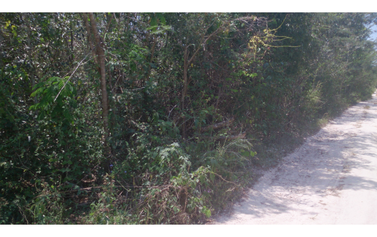 Foto de terreno comercial en venta en  , san francisco koben, campeche, campeche, 1259723 No. 15