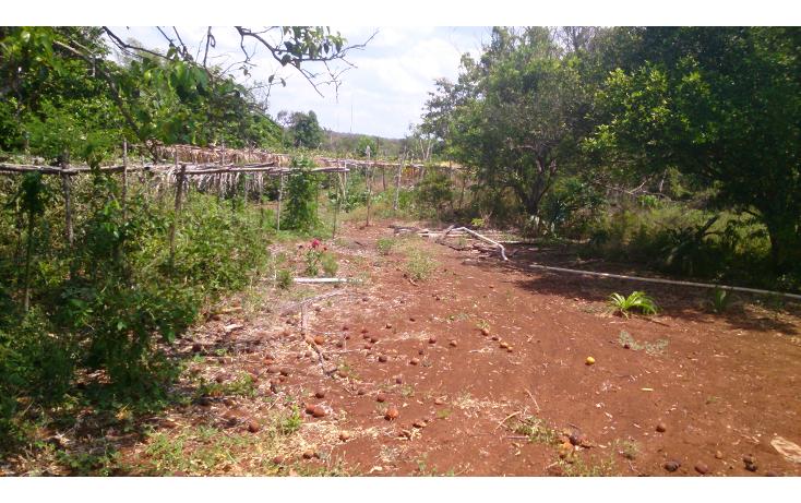 Foto de terreno comercial en venta en  , san francisco koben, campeche, campeche, 1259723 No. 17