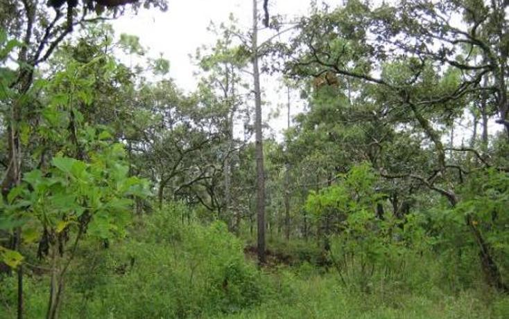 Foto de terreno comercial en venta en  , san francisco periban, peribán, michoacán de ocampo, 1202967 No. 02