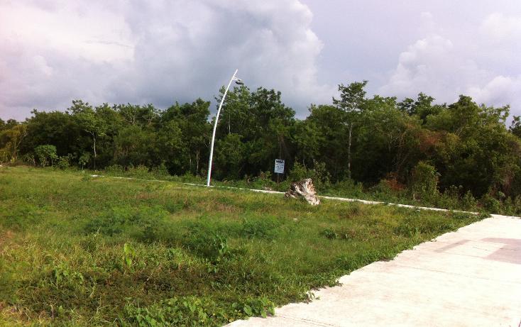 Foto de terreno comercial en venta en  , san gervasio, cozumel, quintana roo, 1089585 No. 01