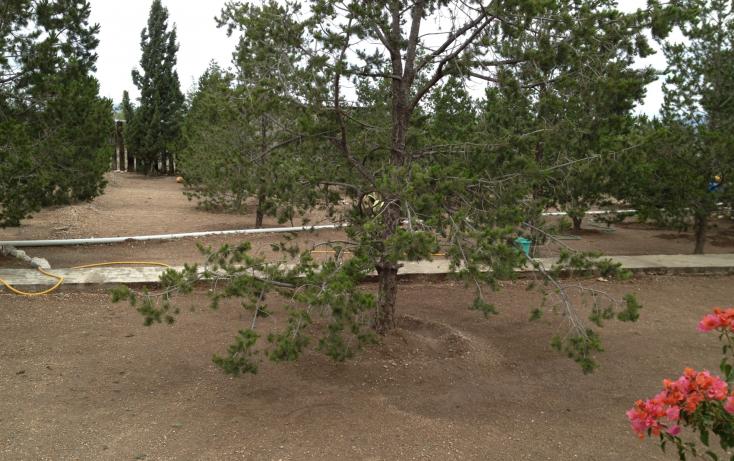 Foto de rancho en venta en, san ignacio de abajo, arteaga, coahuila de zaragoza, 1218291 no 08