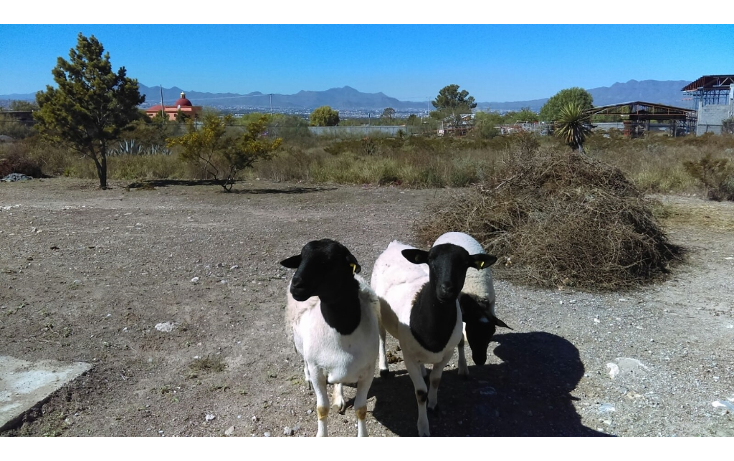 Foto de terreno habitacional en venta en  , san isidro de las palomas, arteaga, coahuila de zaragoza, 1475957 No. 05