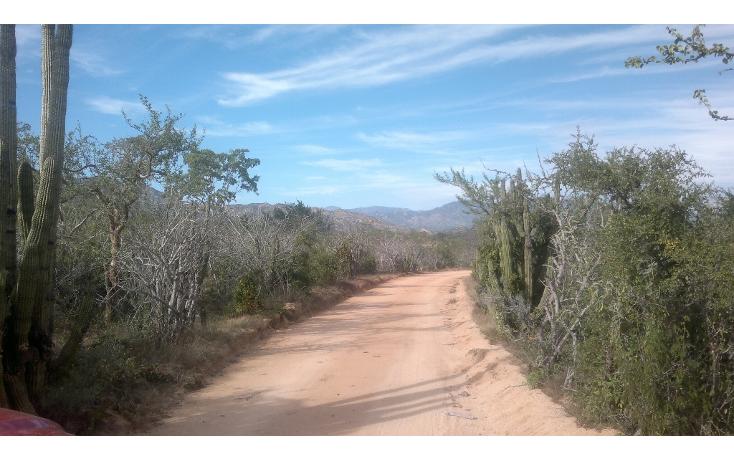 Foto de rancho en venta en  , san josé del cabo (los cabos), los cabos, baja california sur, 1271299 No. 02