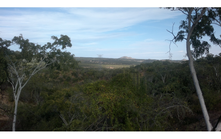 Foto de rancho en venta en  , san josé del cabo (los cabos), los cabos, baja california sur, 1271299 No. 03