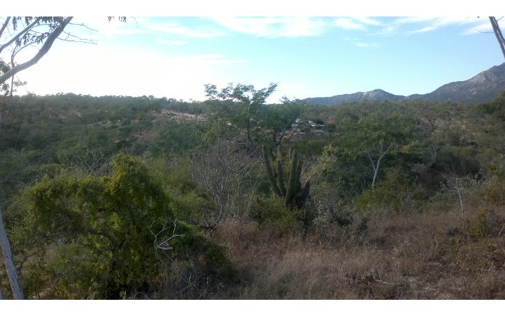 Foto de rancho en venta en  , san josé del cabo (los cabos), los cabos, baja california sur, 1271299 No. 04