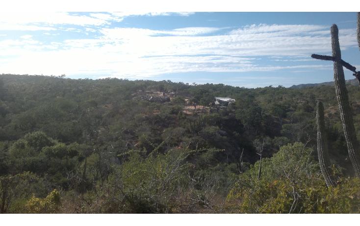 Foto de rancho en venta en  , san josé del cabo (los cabos), los cabos, baja california sur, 1271299 No. 05
