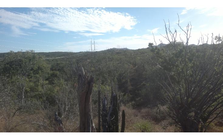Foto de rancho en venta en  , san josé del cabo (los cabos), los cabos, baja california sur, 1271299 No. 06
