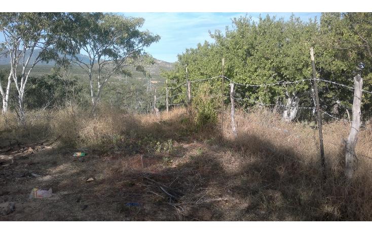 Foto de rancho en venta en  , san josé del cabo (los cabos), los cabos, baja california sur, 1271299 No. 07
