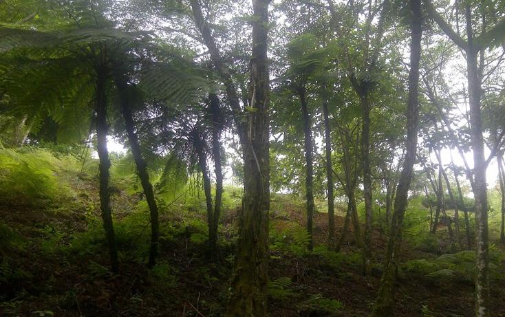 Foto de terreno comercial en venta en  , san juan acateno, teziutlán, puebla, 1127867 No. 04