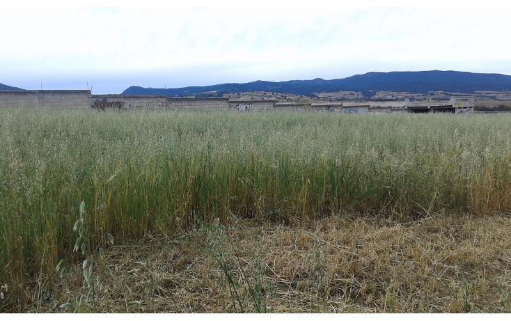 Foto de terreno comercial en venta en  , san juan de las huertas, zinacantepec, m?xico, 1614390 No. 03