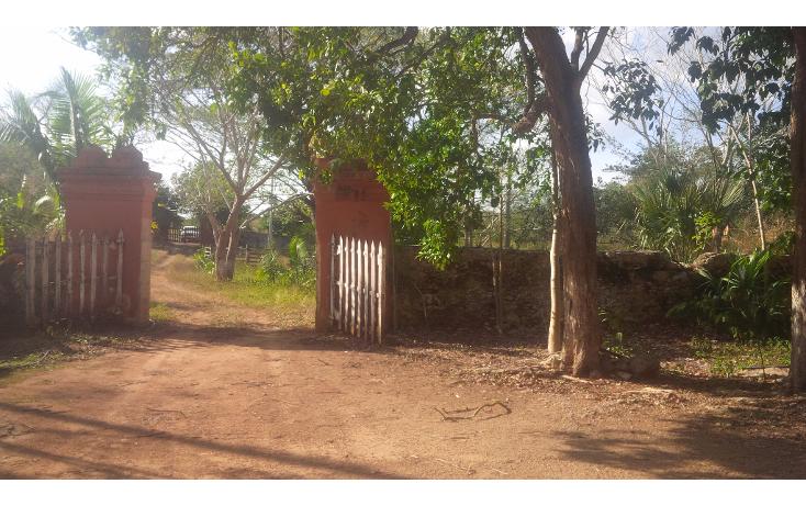 Foto de rancho en venta en  , san juan tekax, tekax, yucatán, 1294271 No. 04