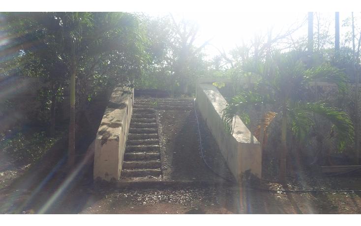 Foto de rancho en venta en  , san juan tekax, tekax, yucatán, 1294271 No. 05