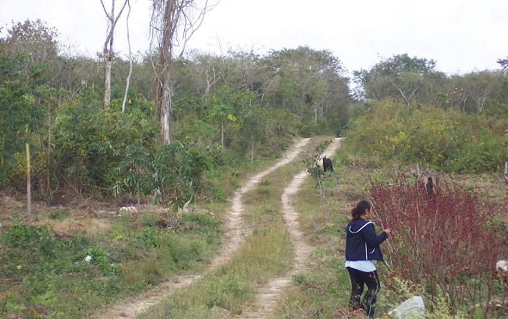 Foto de terreno habitacional en venta en  , san manuel, tizimín, yucatán, 1298127 No. 03