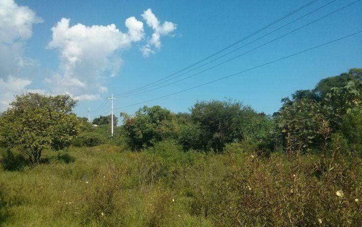 Foto de terreno comercial en venta en, san nicolás de ibarra, chapala, jalisco, 1654073 no 03