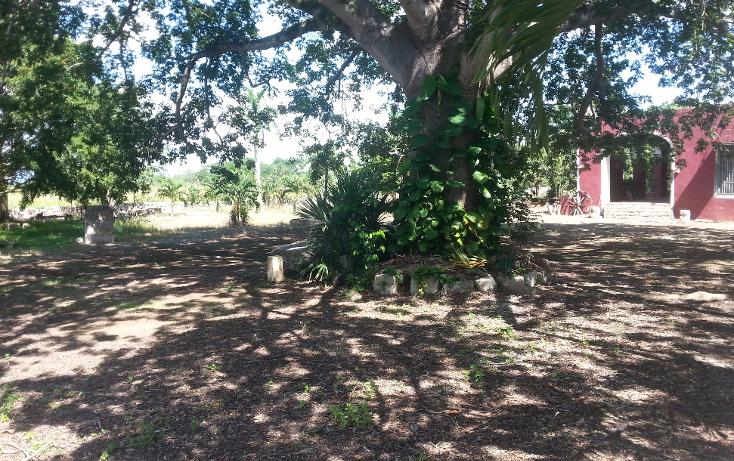 Foto de rancho en venta en  , sanlatah, tekantó, yucatán, 1071349 No. 11
