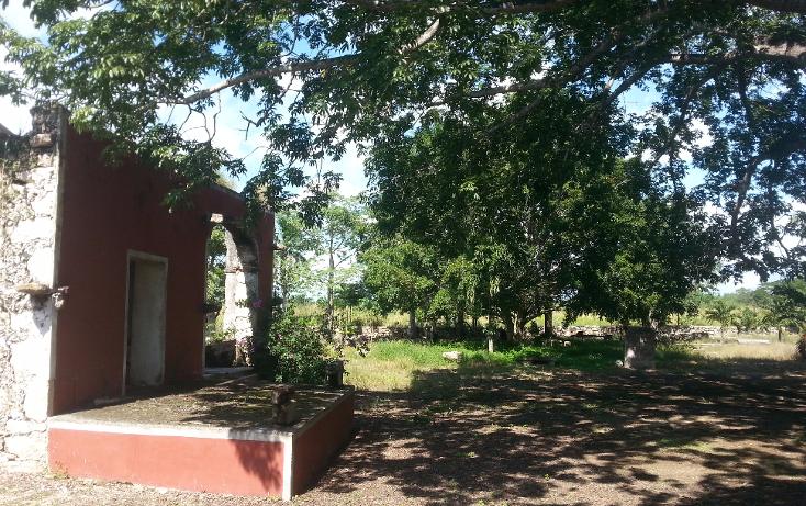Foto de rancho en venta en  , sanlatah, tekantó, yucatán, 1071349 No. 13