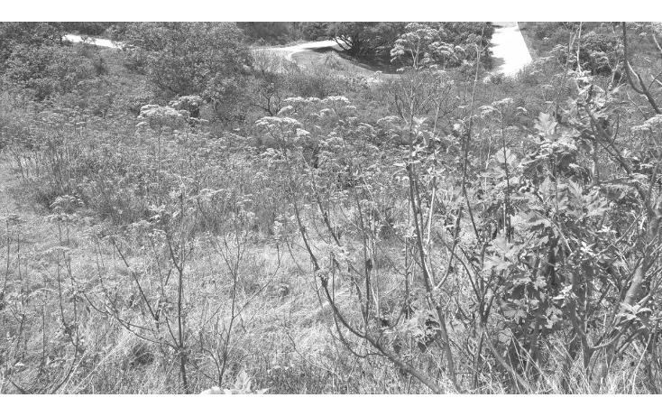 Foto de terreno habitacional en venta en  , santa cruz del astillero, el arenal, jalisco, 2006576 No. 01