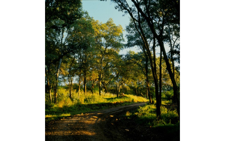 Foto de departamento en venta en  , santa fe cuajimalpa, cuajimalpa de morelos, distrito federal, 1324763 No. 20
