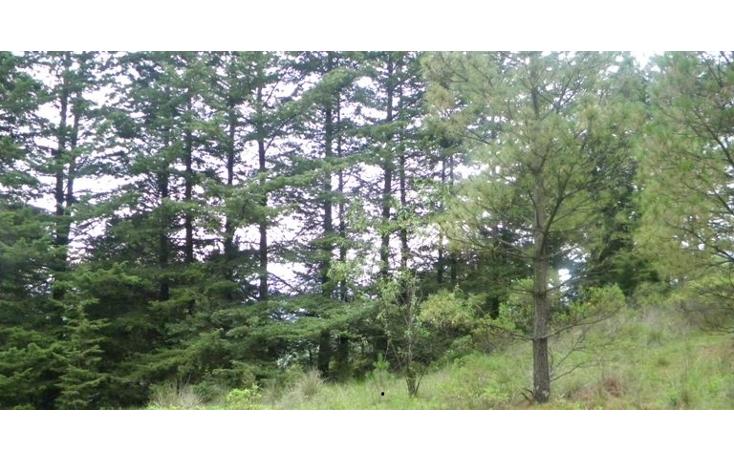 Foto de terreno comercial en venta en  , santa fe mezapa, xalatlaco, m?xico, 1272761 No. 01