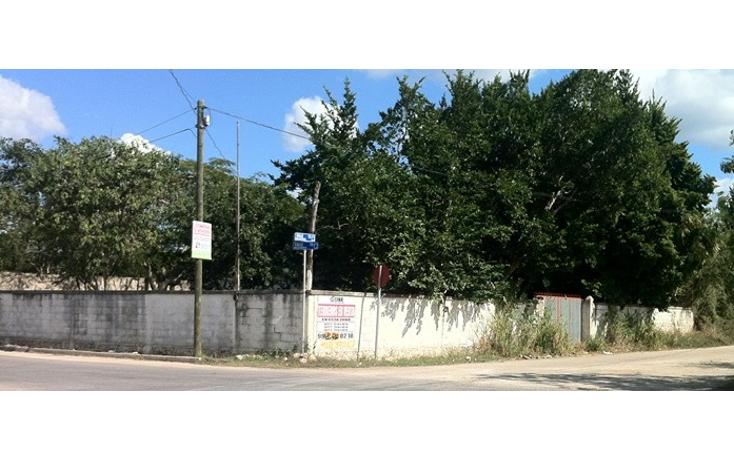 Foto de terreno comercial en renta en  , santa gertrudis copo, m?rida, yucat?n, 1134607 No. 01