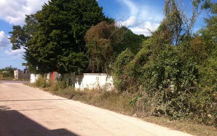 Foto de terreno comercial en renta en  , santa gertrudis copo, m?rida, yucat?n, 1134607 No. 02