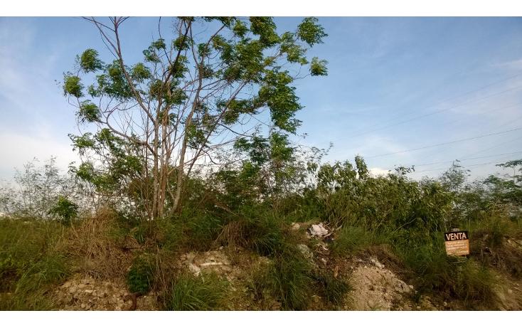 Foto de terreno habitacional en venta en  , santa gertrudis copo, mérida, yucatán, 1149715 No. 06