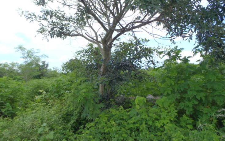 Foto de terreno habitacional en venta en  , santa gertrudis copo, mérida, yucatán, 1238839 No. 04
