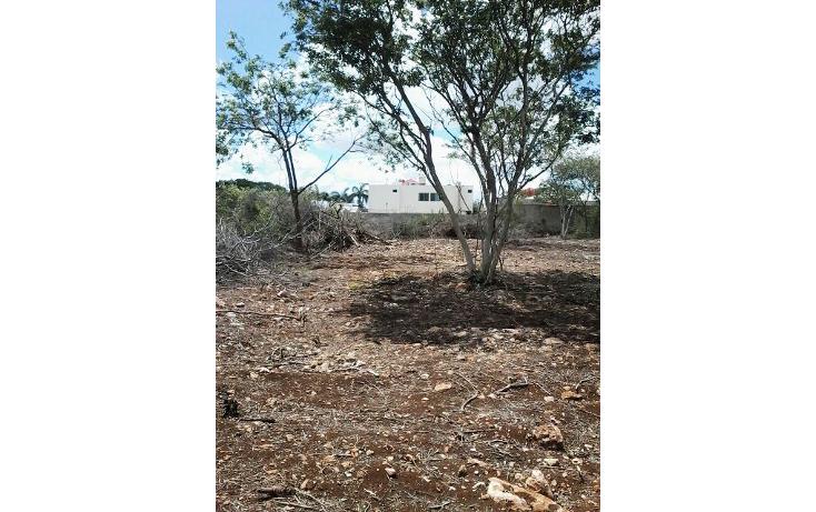 Foto de terreno comercial en renta en  , santa gertrudis copo, m?rida, yucat?n, 1253411 No. 03