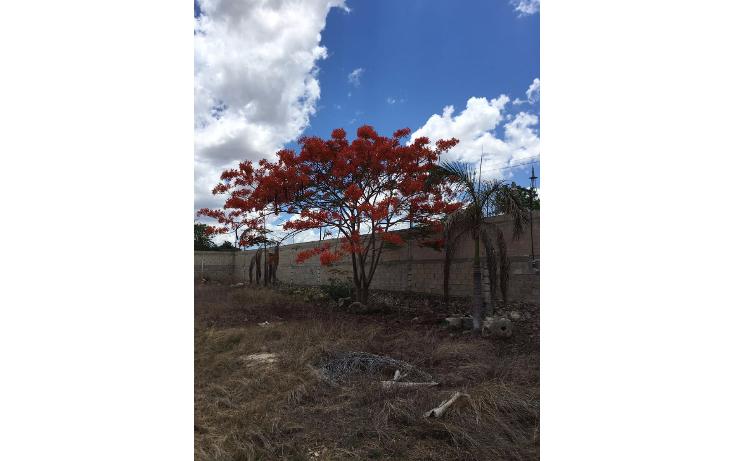 Foto de terreno habitacional en venta en  , santa maria, m?rida, yucat?n, 2005828 No. 07
