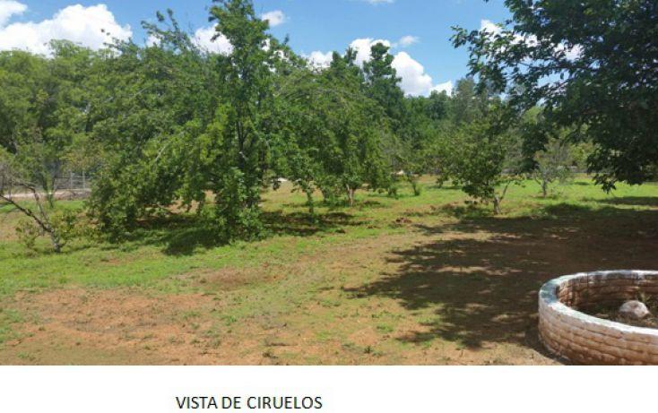 Foto de rancho en venta en, santa monica, chihuahua, chihuahua, 1018725 no 06