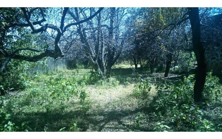 Foto de terreno habitacional en venta en  , santa rita tlahuapan, tlahuapan, puebla, 1712662 No. 04