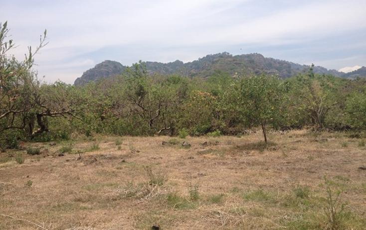 Foto de terreno habitacional en venta en  , santo domingo, tepoztlán, morelos, 1598242 No. 04